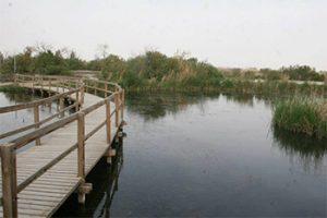 azraq-wildlife