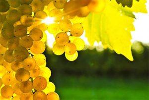 wine-maker