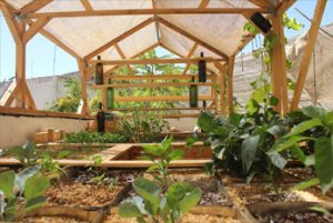 opening-rooftop-garden-greening-the-camps