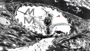 assembli-present-drew-mcdowall-muqataa-mayss