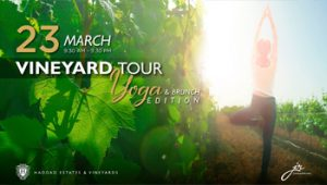 jr-vineyard-tour-yoga-brunch